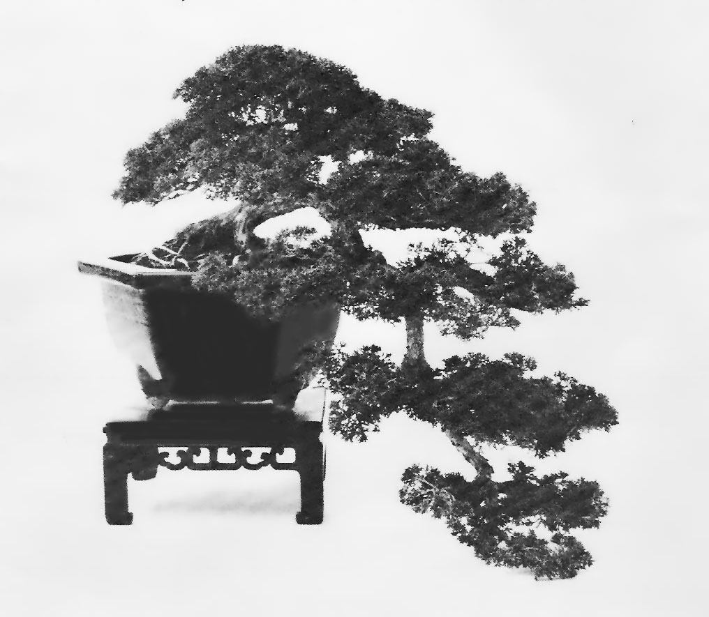 1 Logo tree scan 1979.jpg