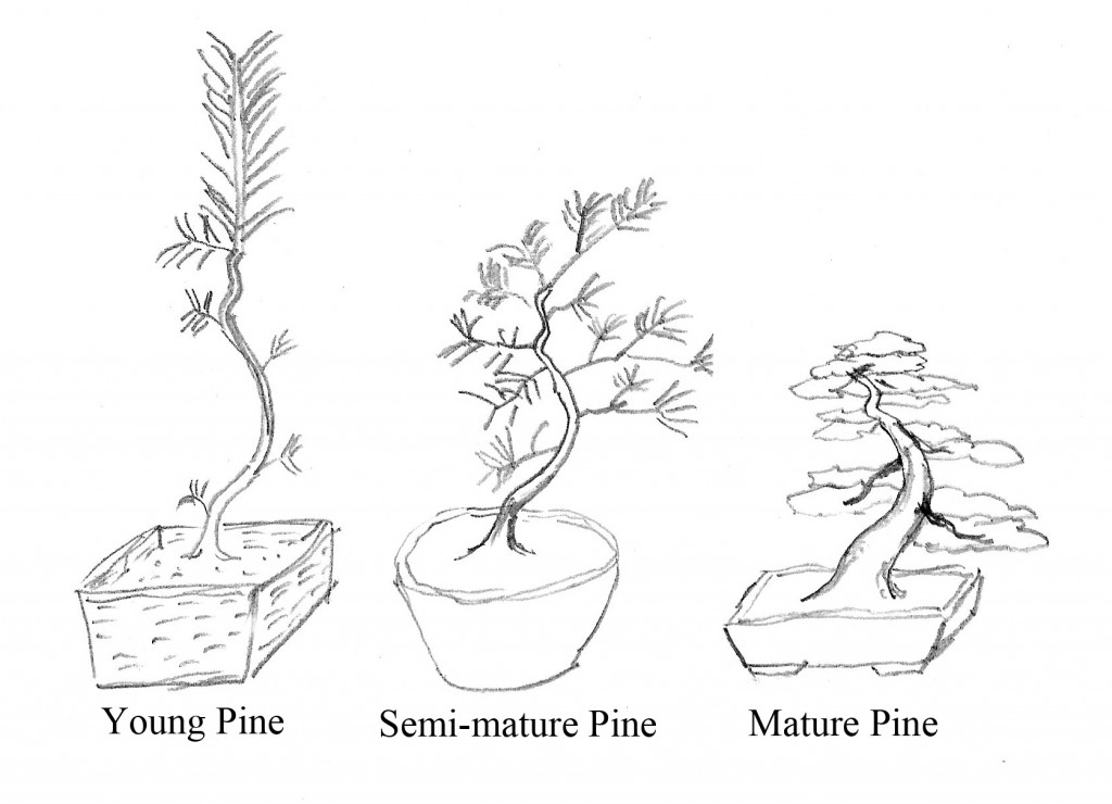 Pine work is different for trees in different states of development.