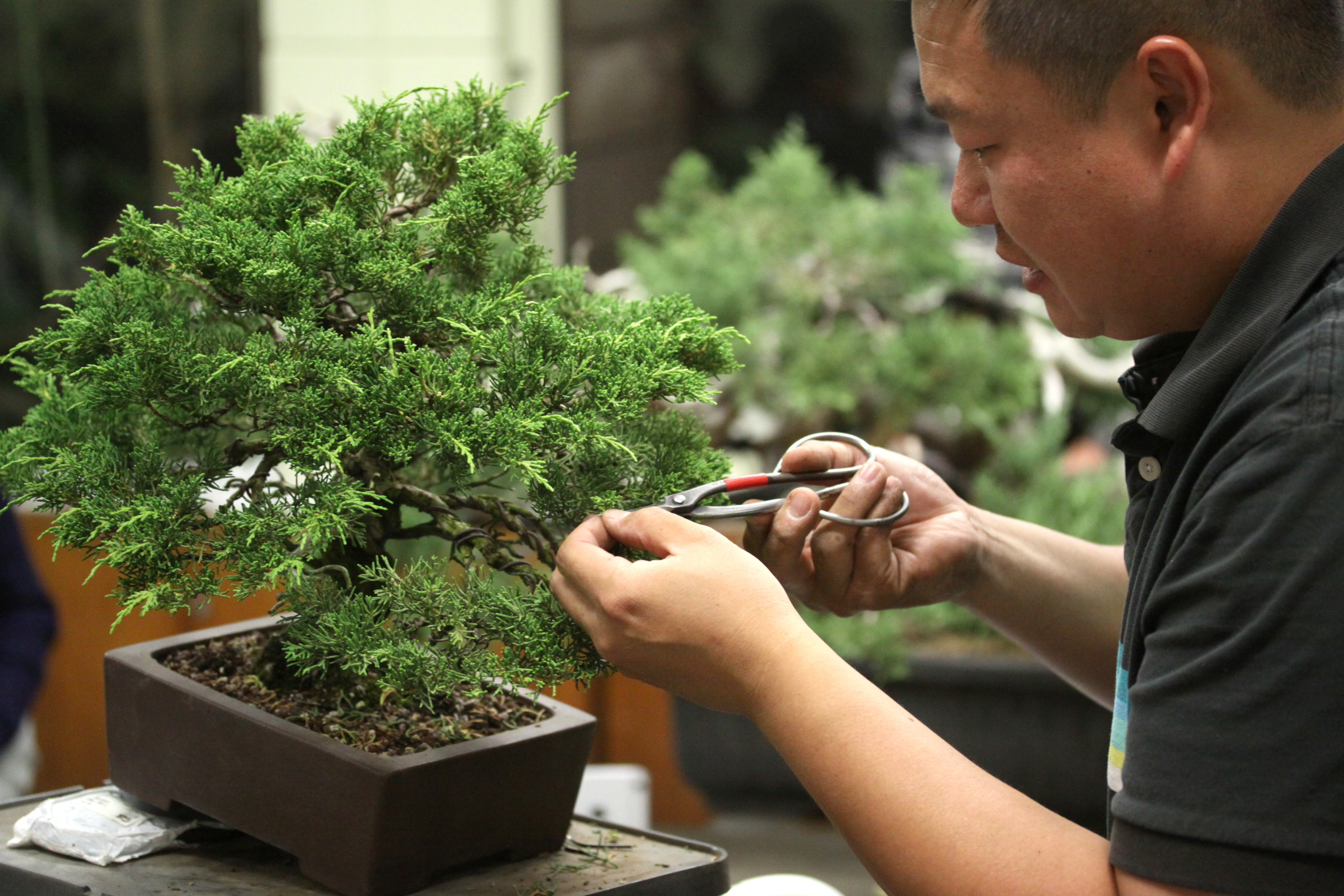 Bssf Bonsai Society Of San Francisco Peter Tea Masters Series Workshops
