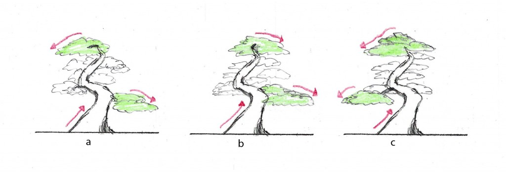 Figure 1.  Tree a has poor flow - the apex goes left while the key branch goes right.     Tree b has good flow to the right with the apex, trunk and key branch all in agreement.    Tree c has cross-flow because the trunk flows right but not strongly and the key branch and the apex flow to the left.   The accent plant would be place on the left.