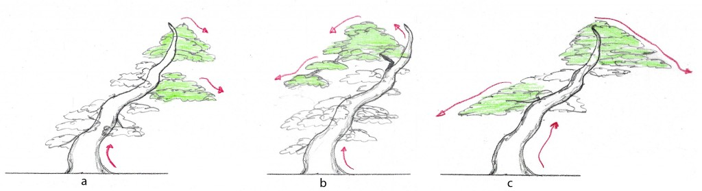 "Figure 3.   Tree ""a"" has good flow and a key branch that is not on the bottom.  Tree ""b"" has good flow and the key branch is an extension of the apex.   Tree ""c"" has poor flow, the key branch is the lowest branch on the left."