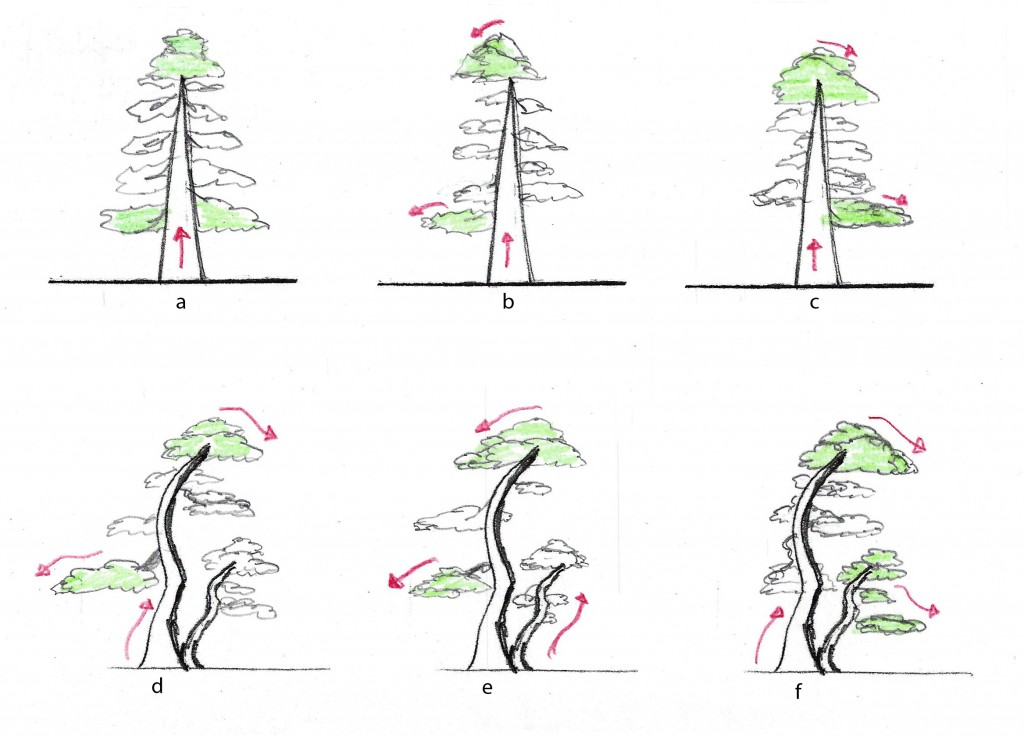 "Figure 4.   Tree ""a"" has neutral flow.  Tree ""b"" has weak flow to the left, tree c has weak flow to the right.    Tree d has"