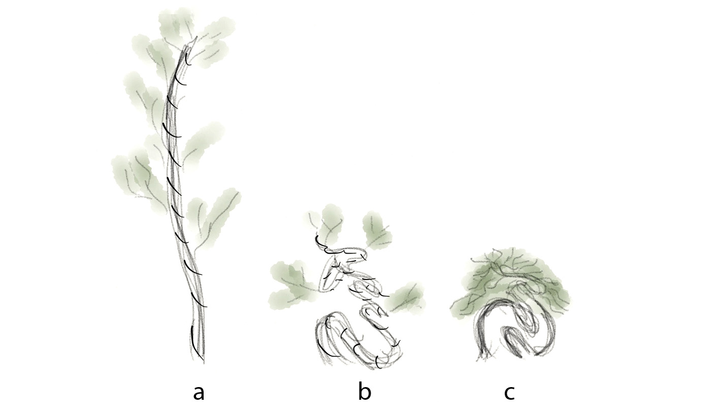 Outstanding Bssf Bonsai Society Of San Francisco Designing Yamadori Style Wiring Digital Resources Timewpwclawcorpcom