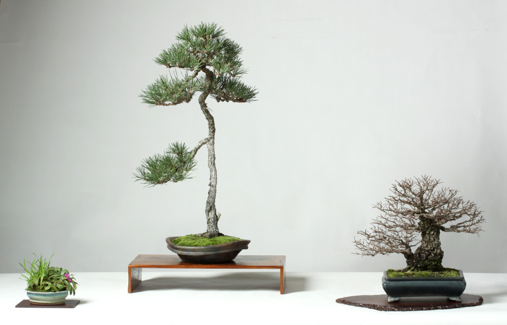 A three point display.  The elm and the pine flow to the left and the accent plant balances the display.