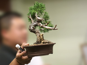 BSSF Annual Bonsai Auction