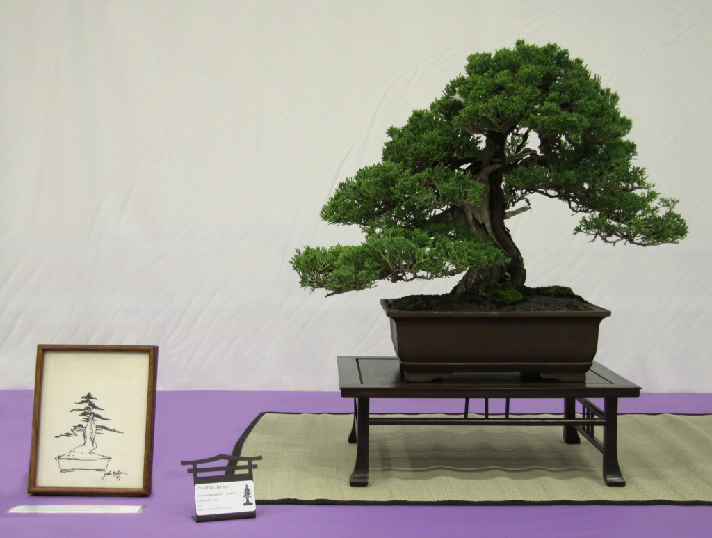An old juniper at the 2014 REBS show with a sketch from long ago created by John Naka.   While it's possible to predict the near term and even a few years out, many trees will change greatly over the course of decades of bonsai care.