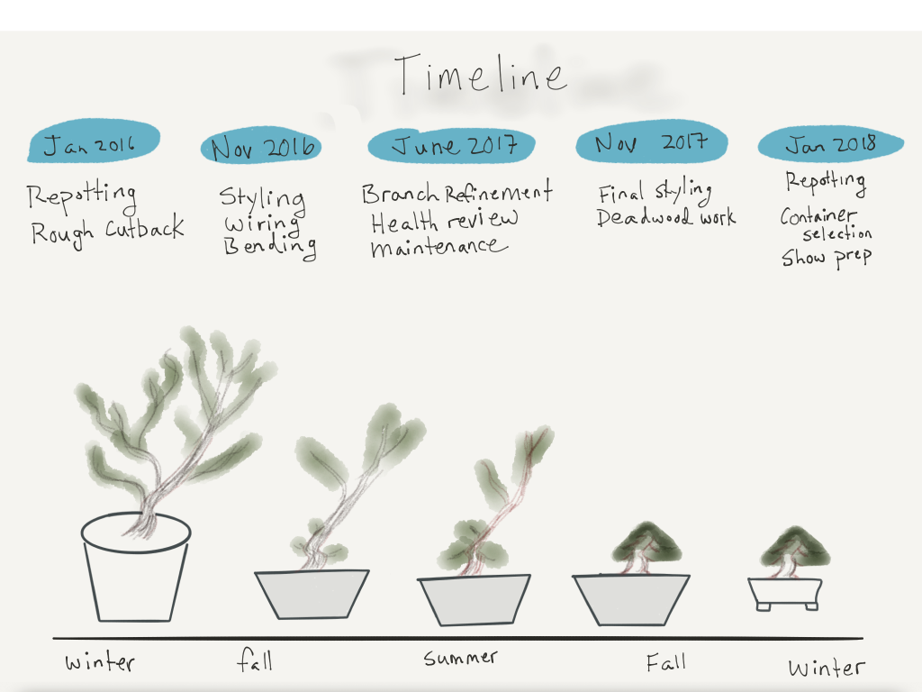 Eric's graphical timeline for the Practicum.